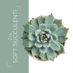 Soft Succulent an in color from the new catalog
